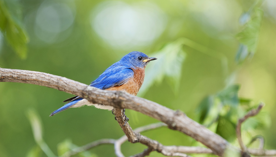 Why Do Bluebirds Attack Squirrels?
