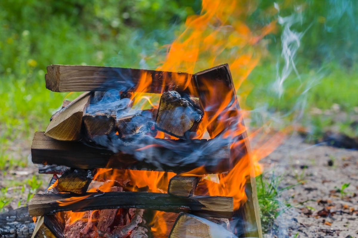 Is Cottonwood Good For Cooking?